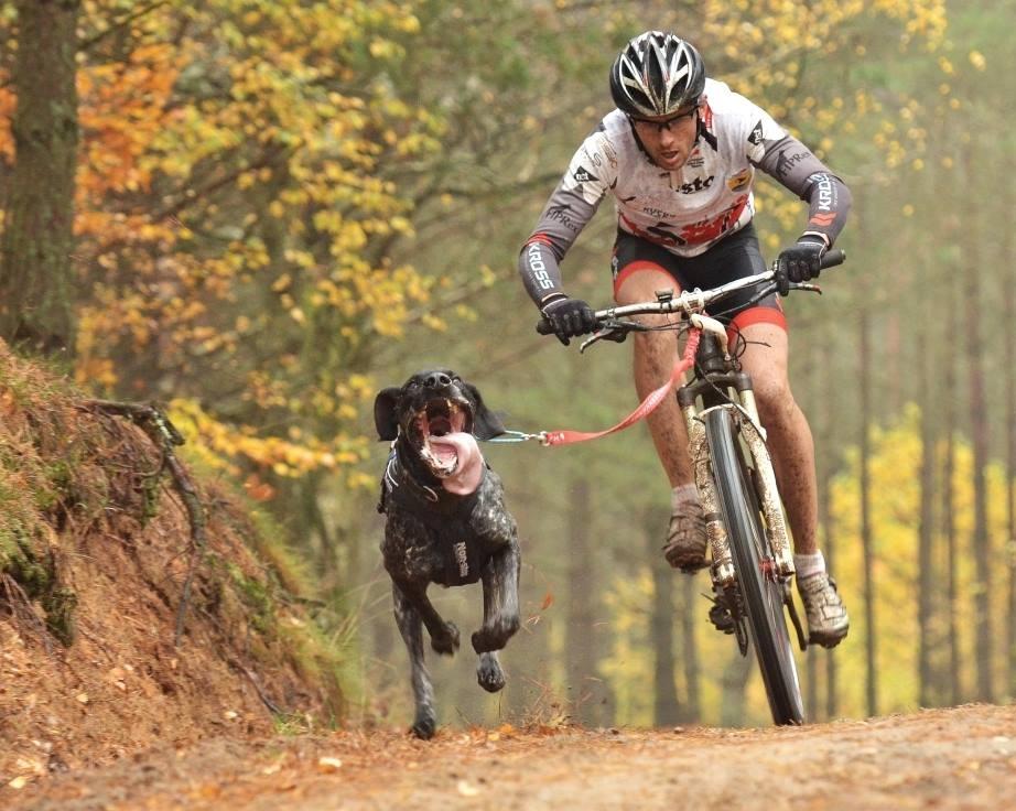 [PR] Złote, i nie tylko, medale polskich bikejoringowców
