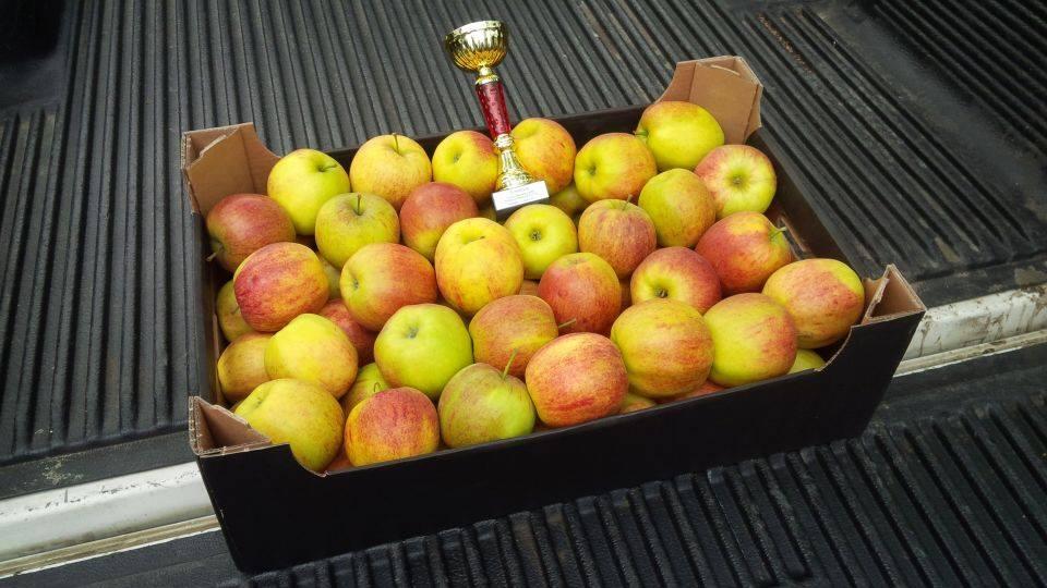 puchar mazowsza nagroda skrzynka jabłek puchar